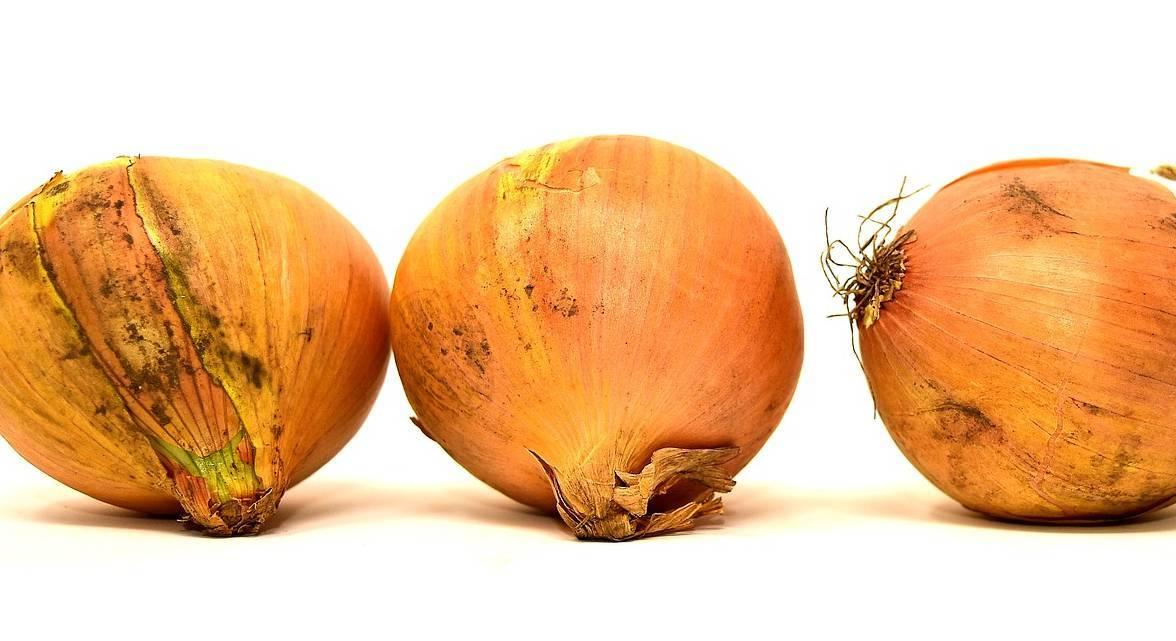 Вредители лука: симптомы и способы борьбы