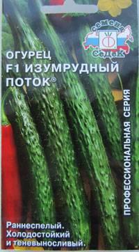 Сорт огурцов изумрудный поток f1: описание и характеристика, отзывы