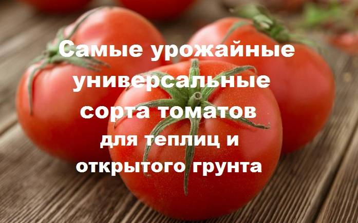 Сорта томатов для открытого грунта для средней полосы: лучшие и урожайные