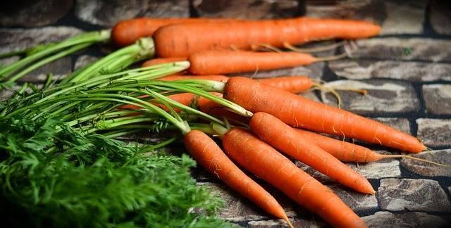 Как правильно бороться с морковной мухой