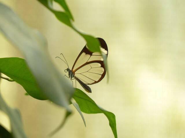 Чем обработать смородину от вредителей – список препаратов против вредных насекомых
