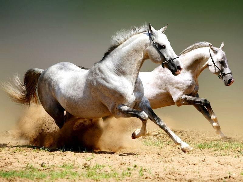 Сколько может стоить породистая и обычная лошадь и самые дорогие породы