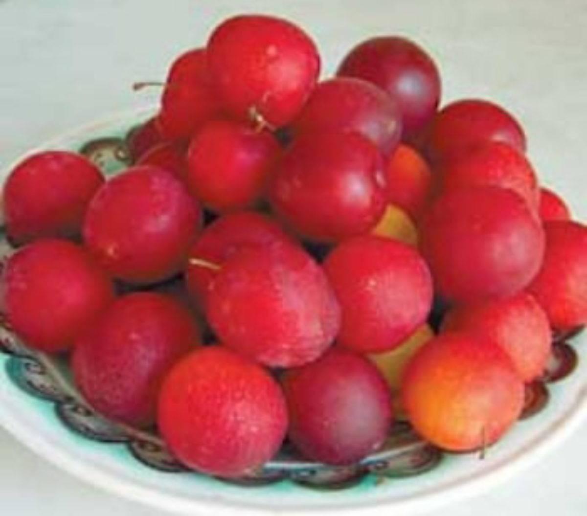 Алыча скороплодная — описание сорта, фото и отзывы садоводов