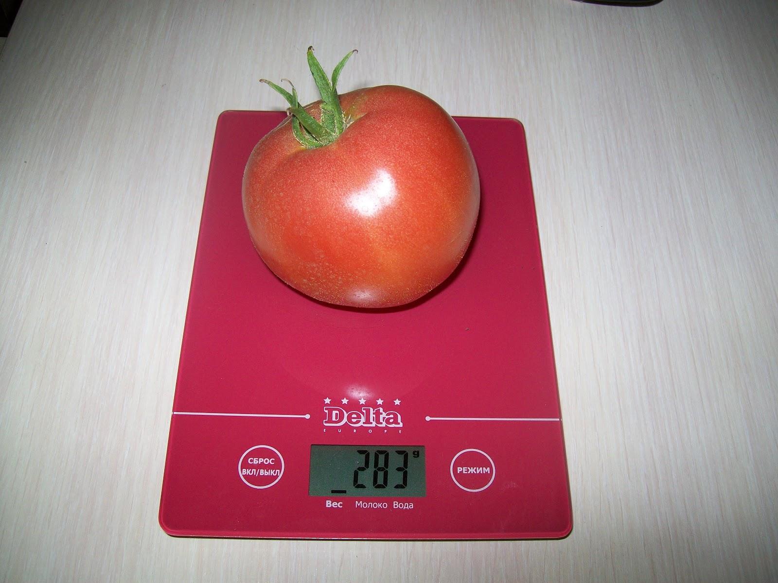Какие хорошие сорта томатов