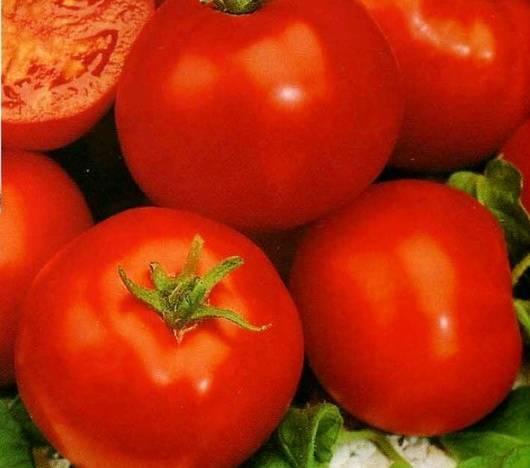 Характеристика и описание сорта томата Джейн
