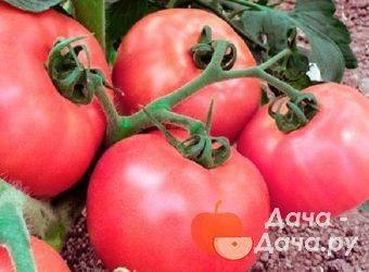 Малиновая империя f1 – урожайный томат без хлопот. описание гибрида и выводы бывалых огородников