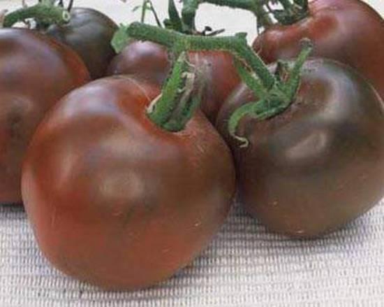 Характеристика и описание сорта томата Черный Принц, его урожайность