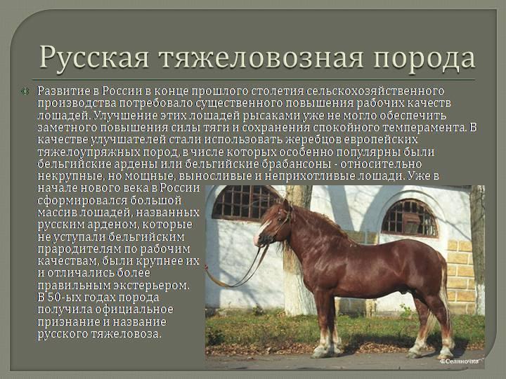 Самые большие лошади в мире