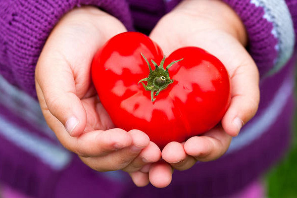 Томат пылающее сердце: описание сорта, характеристики и выращивание с фото