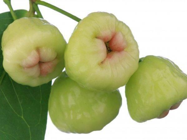Описание и характеристики сорта яблони жигулевское, поэтапная посадка и уход