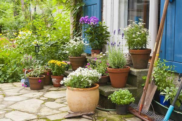 Бархатцы: выращивание и уход в домашних условиях. что поможет сохранить растению здоровье и красоту?