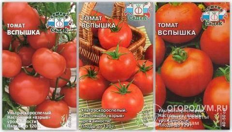 Вспышка — отличный сорт вкусных ультраранних томатов