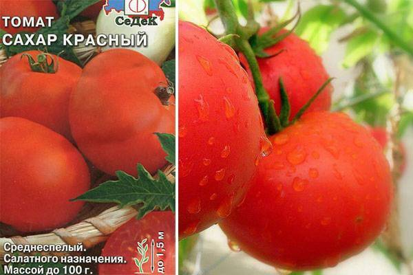 Сорт томата «коричневый сахар»: описание, характеристика, посев на рассаду, подкормка, урожайность, фото, видео и самые распространенные болезни томатов