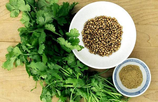 Кинза, кориандр - 1048 домашних вкусных рецептов приготовления