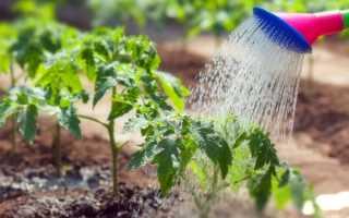 Правила полива томатов в открытом грунте и теплице: как часто и сколько