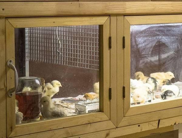 Мастер-класс по изготовлению комфортного брудера для цыплят