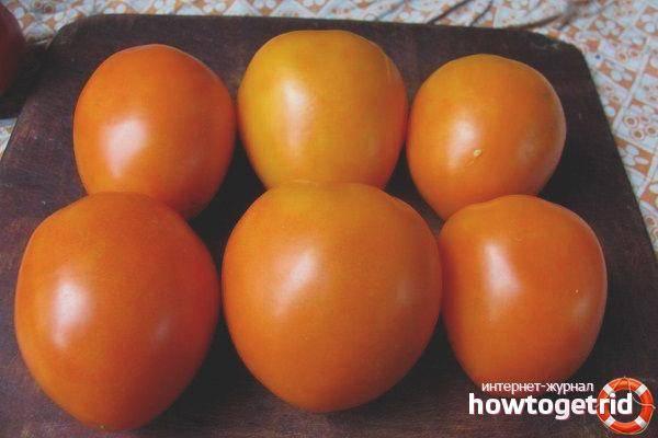 Описание томата золотые яйца