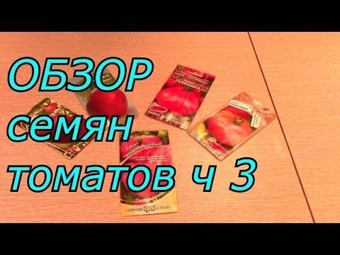 Гибрид дебютантка: полное описание и рекомендации по уходу за томатом