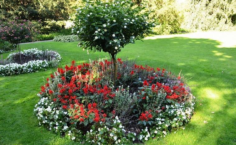 Приёмы создания красивой цветочной композиции из тюльпанов на участке