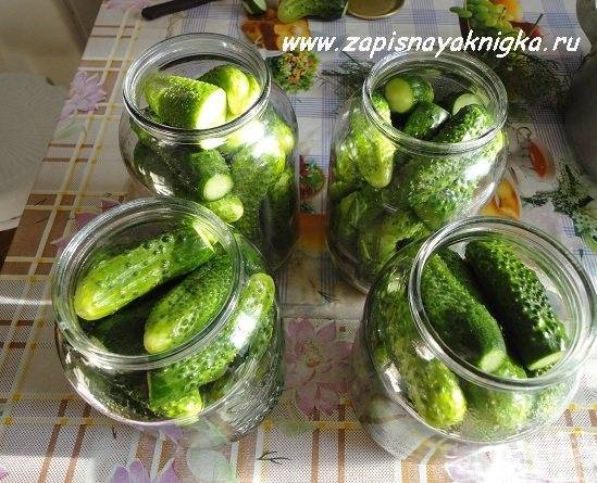Огурцы маринованные без уксуса с лимонной кислотой на зиму