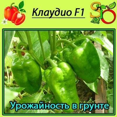 Клаудио f1: описание перца и особенность его выращивания