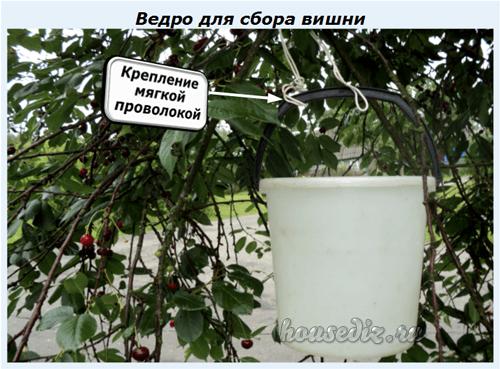 Как собрать черешню на высоком дереве