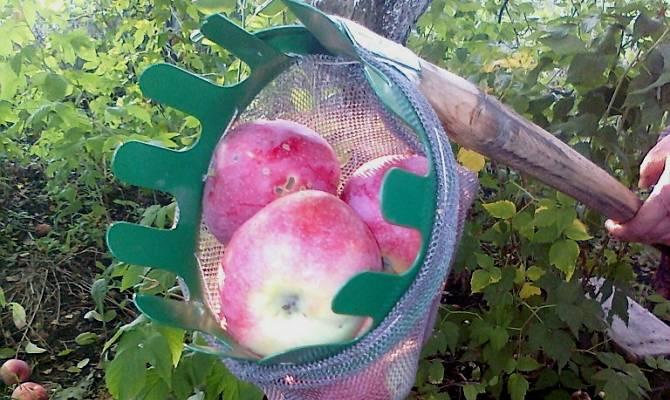 Плодосъемники: виды, лучшие производители и секреты выбора