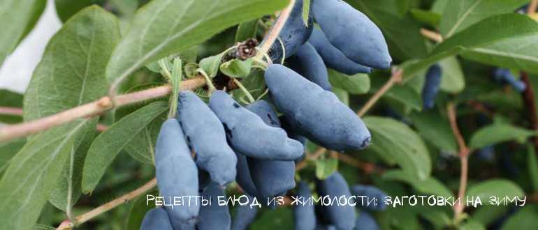 Варенье-пятиминутка из жимолости на зиму — 8 рецептов с фото пошагово