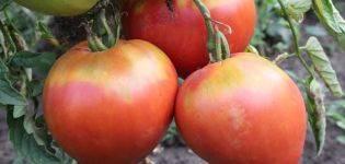 Среднеспелый сорт с приятным вкусом и мощными кустами — томат «капия розовая»