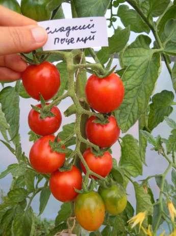 Какие сорта томатов самые сладкие?