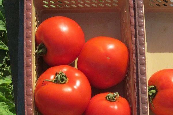 Что такое гибриды томатов f1?