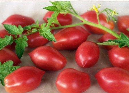 Сорт томатов царь колокол — описание, посадка и уход