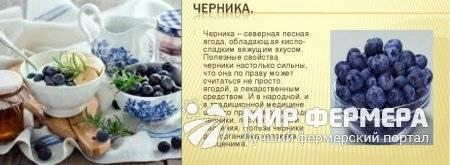 Сиропы на зиму - рецепты заготовок