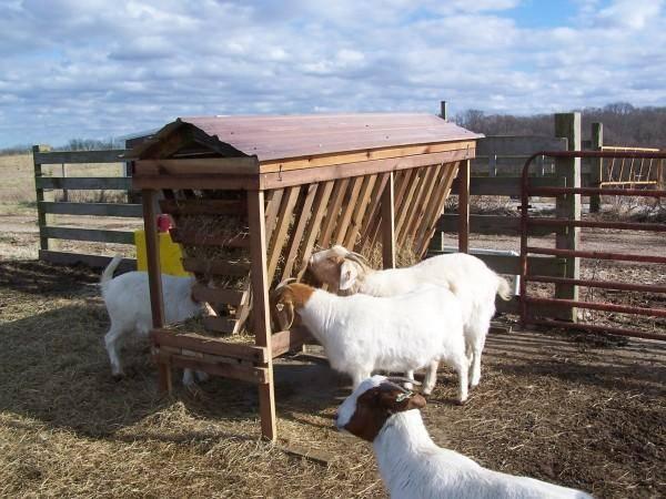Топ-4 вида кормушек для овец, размеры и как сделать своими руками