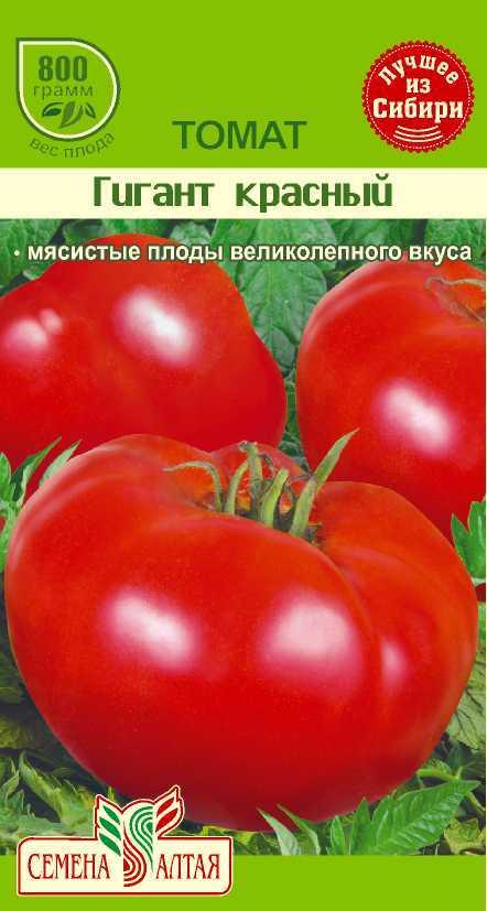 Томат гигант: особенности сорта и 6 этапов выращивания рассады