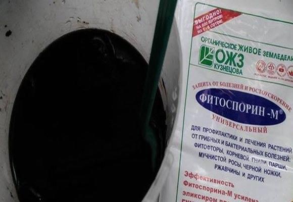 Инструкция по применению удобрения «Фитоспорин» на огороде