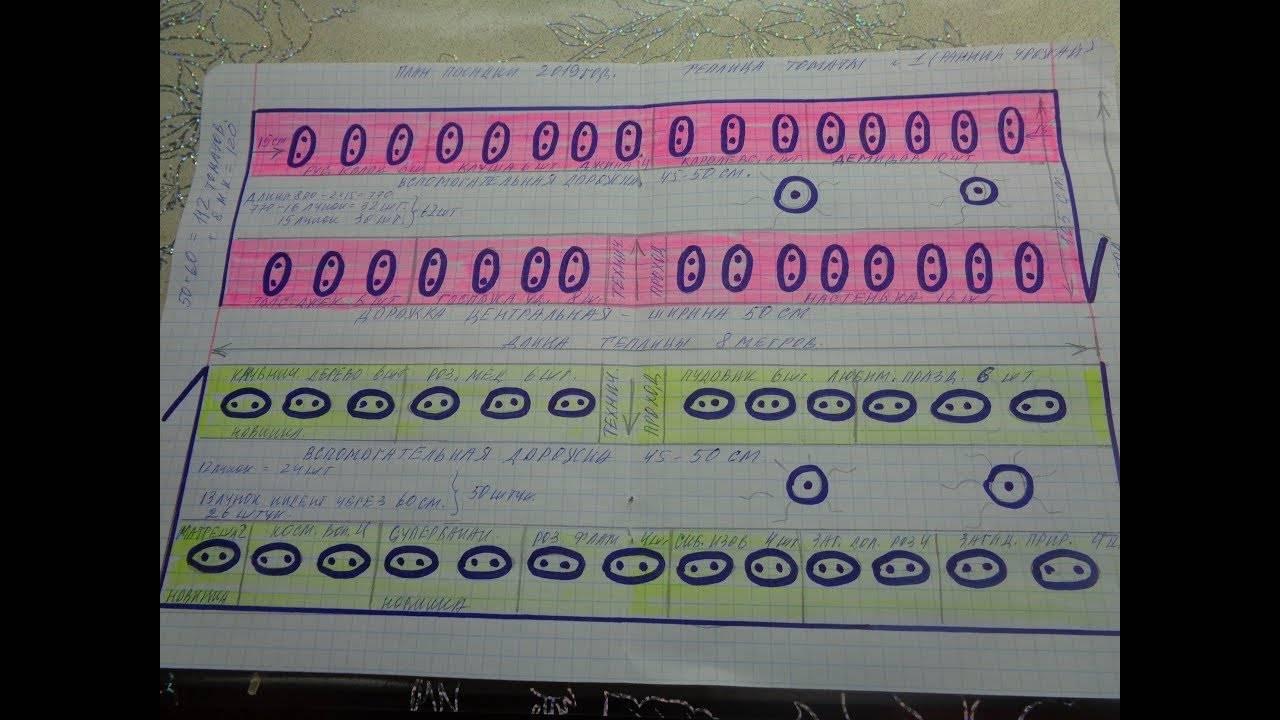 Схема посадки и расположения томатов в теплице 3х6, количество