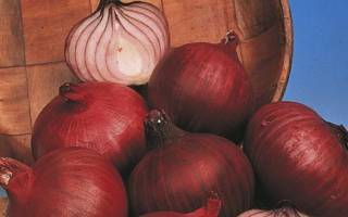 Красный репчатый лук ред барон. описание и фото, выращивание и уход