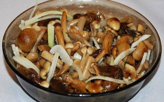 Маринованные белые грибы на зиму, рецепты в банках без стерилизации