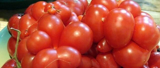 Сорт томатов любимый праздник – находка для дачников