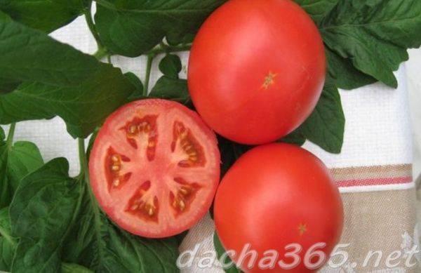 Высокая урожайность с томатом «дубок»: характеристика и описание сорта, фото, особенности выращивания помидоров