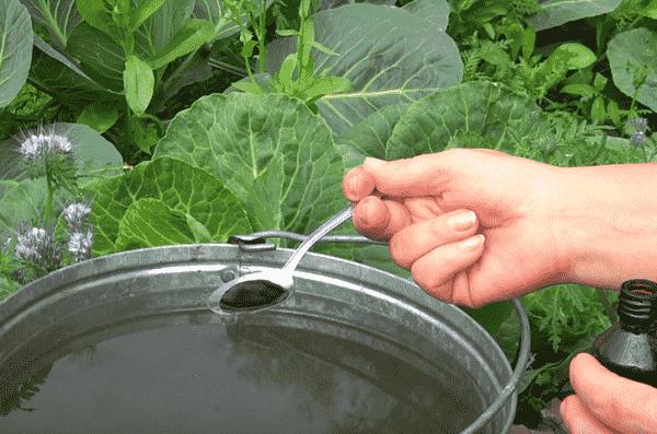 Подкормка капусты в открытом грунте, какие удобрения лучше использовать