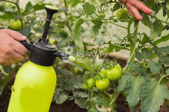 Метронидазол в огороде: полезные качества, применение, нормы
