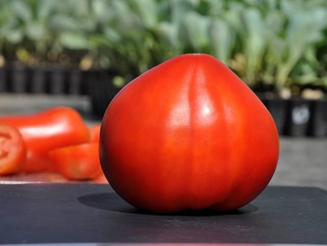 Описание и урожайность томата перцовка, отзывы о сорте