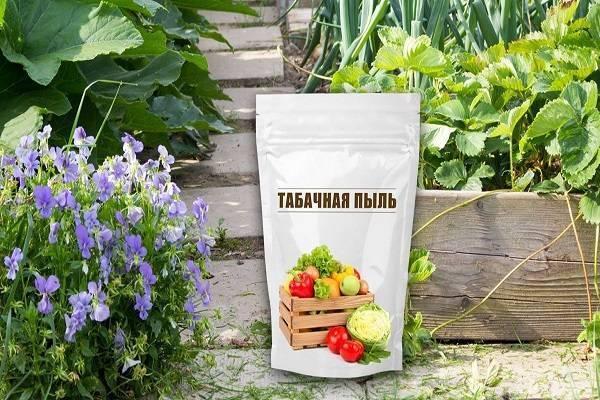 Табачная пыль от вредителей: применение в садоводстве и отзывы