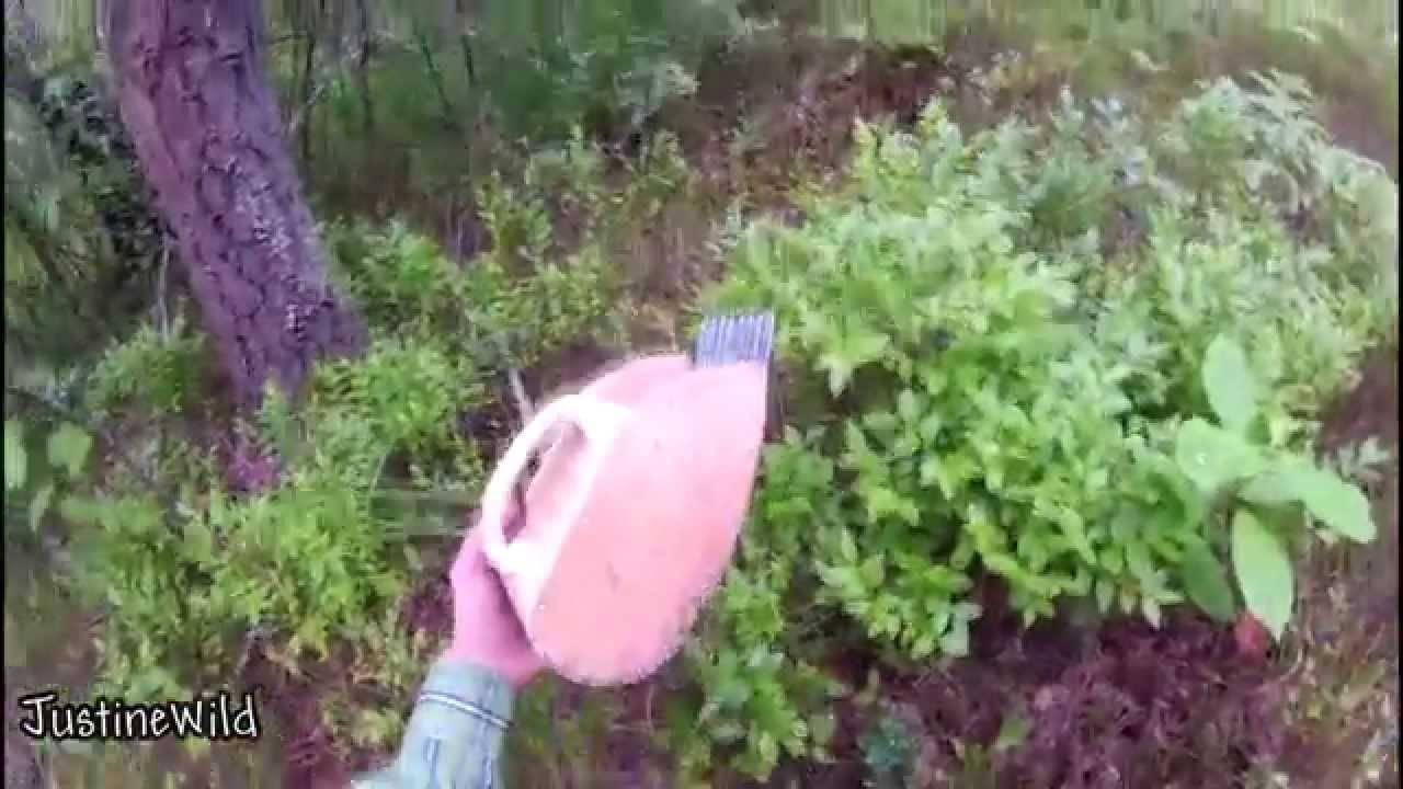 Как сделать комбайн для сбора ягод своими руками