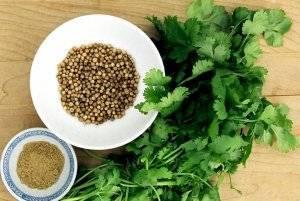 Как сохранить свежесть и аромат листьев кинзы