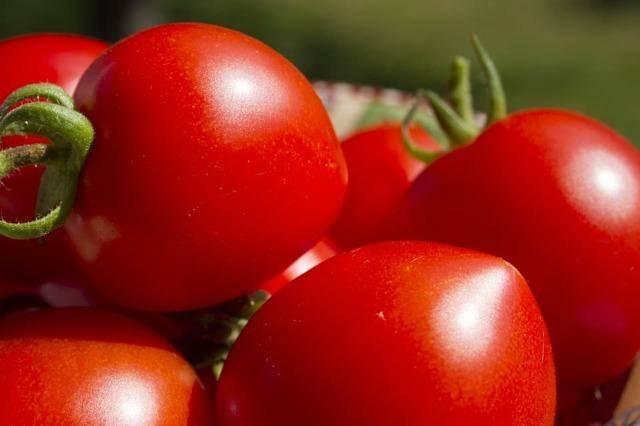 Царь колокол томат отзывы