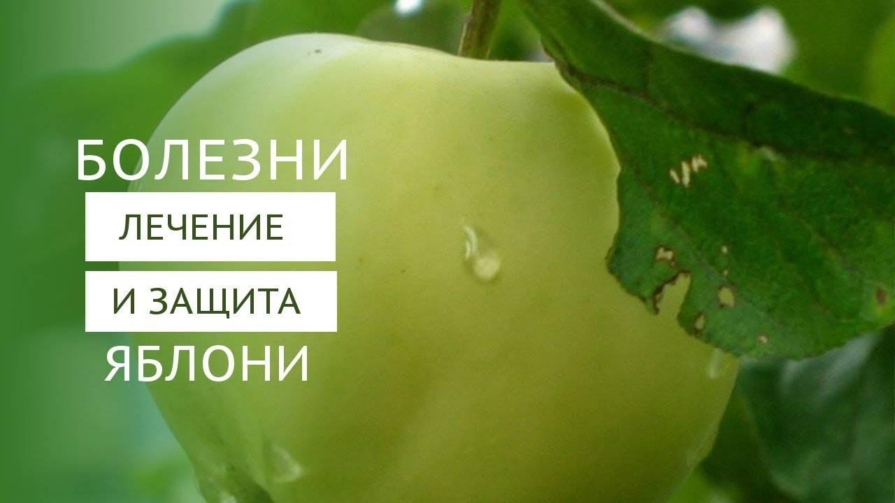 Колонновидные сорта яблони