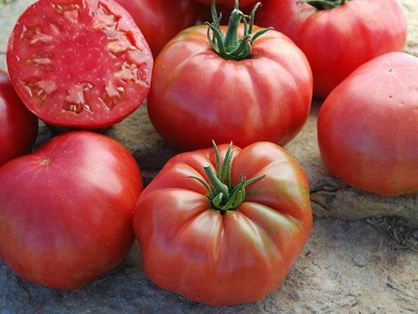 Низкорослый гибрид для открытого грунта — томат семь сорок f1: характеристики сорта и отзывы об урожайности помидоров